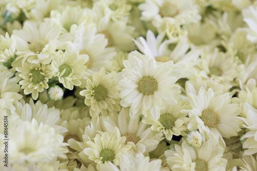 Tela Arranjo floral com margaridas