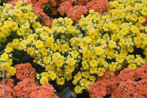 Tela Arranjo floral