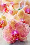 Piękna orchidea na drewnianym stole