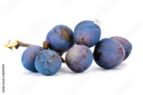 Photo  Berries of sloe
