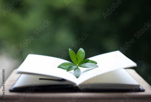 book or notebook with leaves on neture background Wallpaper Mural