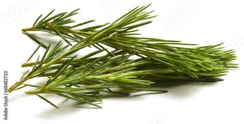 Fototapeta Pinus Fyrreslægten Pine Beintbaam Sosna Sosna Pino Pin obraz