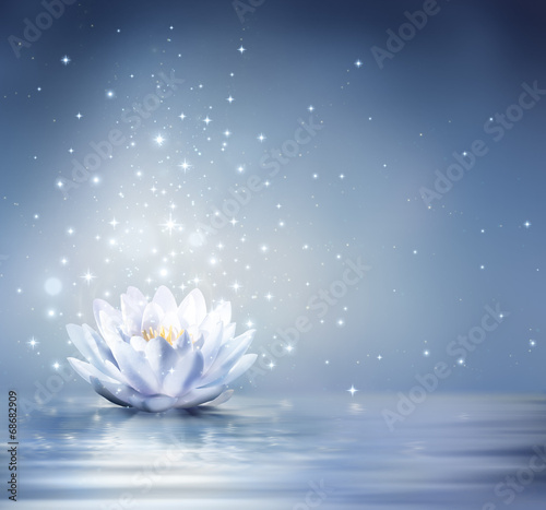 Garden Poster Lotus flower waterlily light blue on water - fairytale background