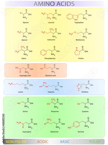Amino acids table Canvas Print