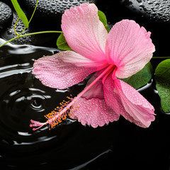 Obraz na Szkle Do Spa Beautiful spa concept of pink hibiscus, green tendril passionfl