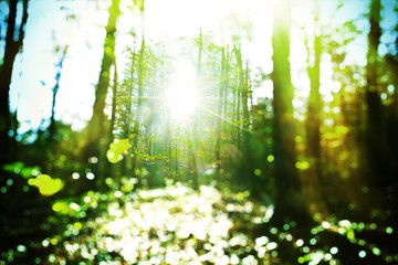 Sunny forest - abstract photo with selective focus and bokeh