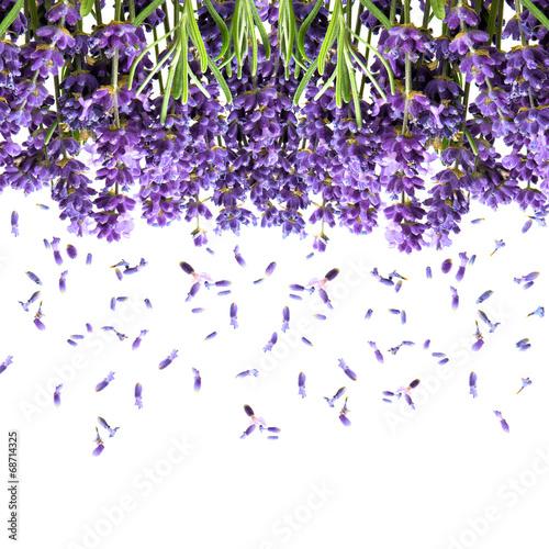 kwiaty-lawendy-na-bialym-tle-kwiatowy-tlo