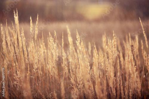 Foto autumn dry grass sedge