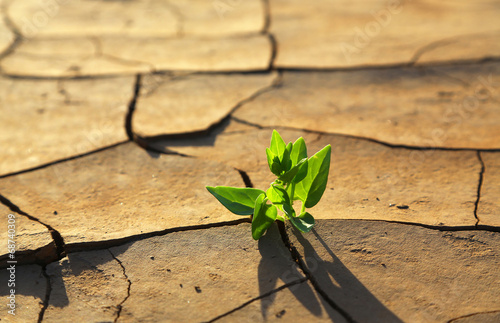 Foto op Canvas Planten Plant growing through dry cracked soil
