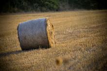 Round Hay Bale In Sardinia