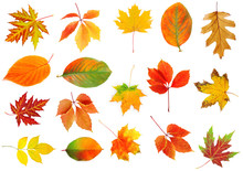 Autumn Leaves Collage Isolated On White