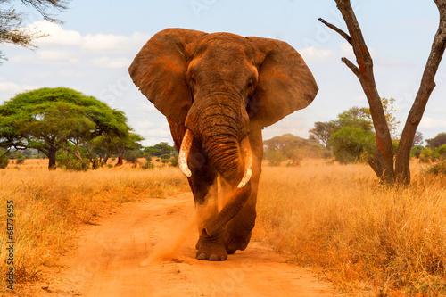 Photo sur Toile Elephant Elephant dusting and walking