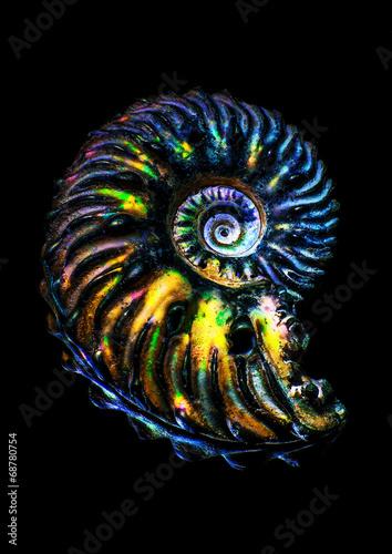 Colorful iridescent ammonite fossil Canvas Print