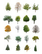 trees isolated