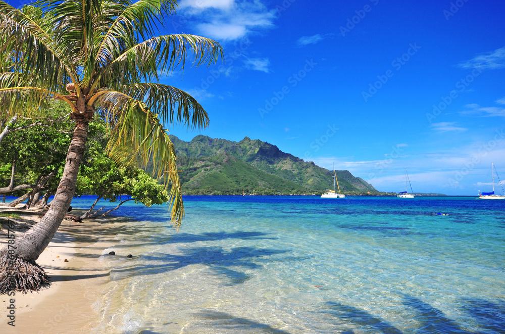 Fototapeta Turquoise waters off Moorea in Tahiti, French Polynesia