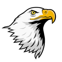 Bald Eagle, American Eagle, Color Version.