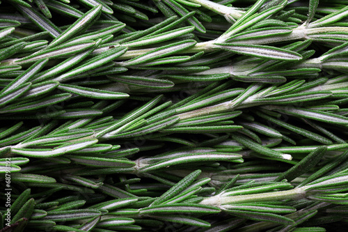 Fotografie, Tablou seasoning fresh rosemary