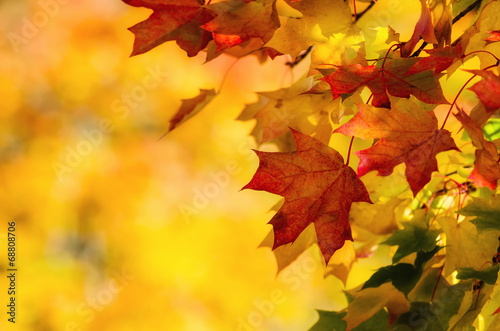 Colorful autumn maple leaves on a tree branch Fotobehang