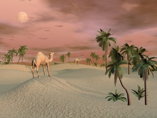 Fototapeta Camels in the desert - 3D render