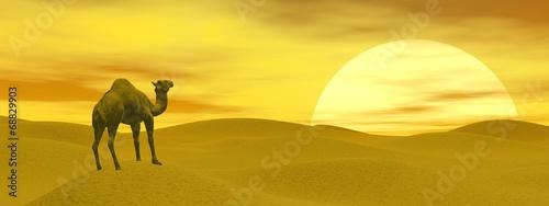 Camel in the desert - 3D render - 68829903