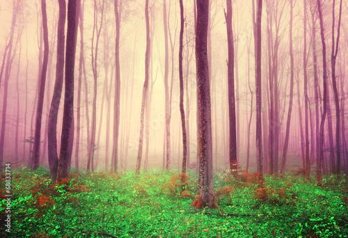 abstrakcyjny-las