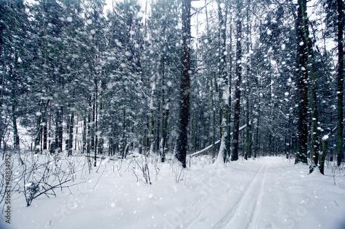 Fototapeta snow in the forest obraz na płótnie