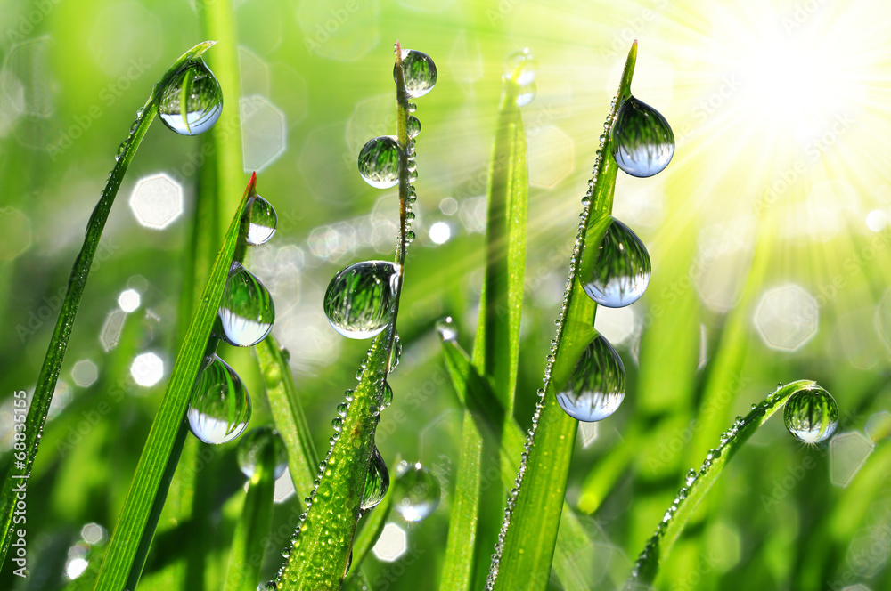 Fototapety, obrazy: Fresh grass with dew drops close up