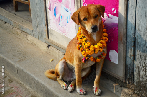 Wall Murals Nepal Kukur Tihar (worship of dog) in Tihar Deepawali festival