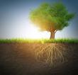 Leinwanddruck Bild - tree with roots