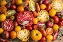 Colorful Tomatoes Background. Fresh Organic Tomatoes.