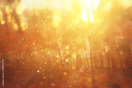 fototapeta na lodówkę blurred abstract photo of light burst among trees and glitter bo