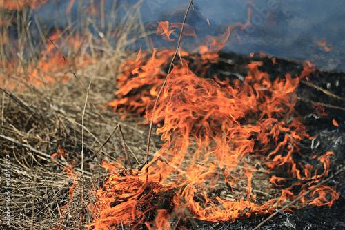 Foto  fire burning dry grass