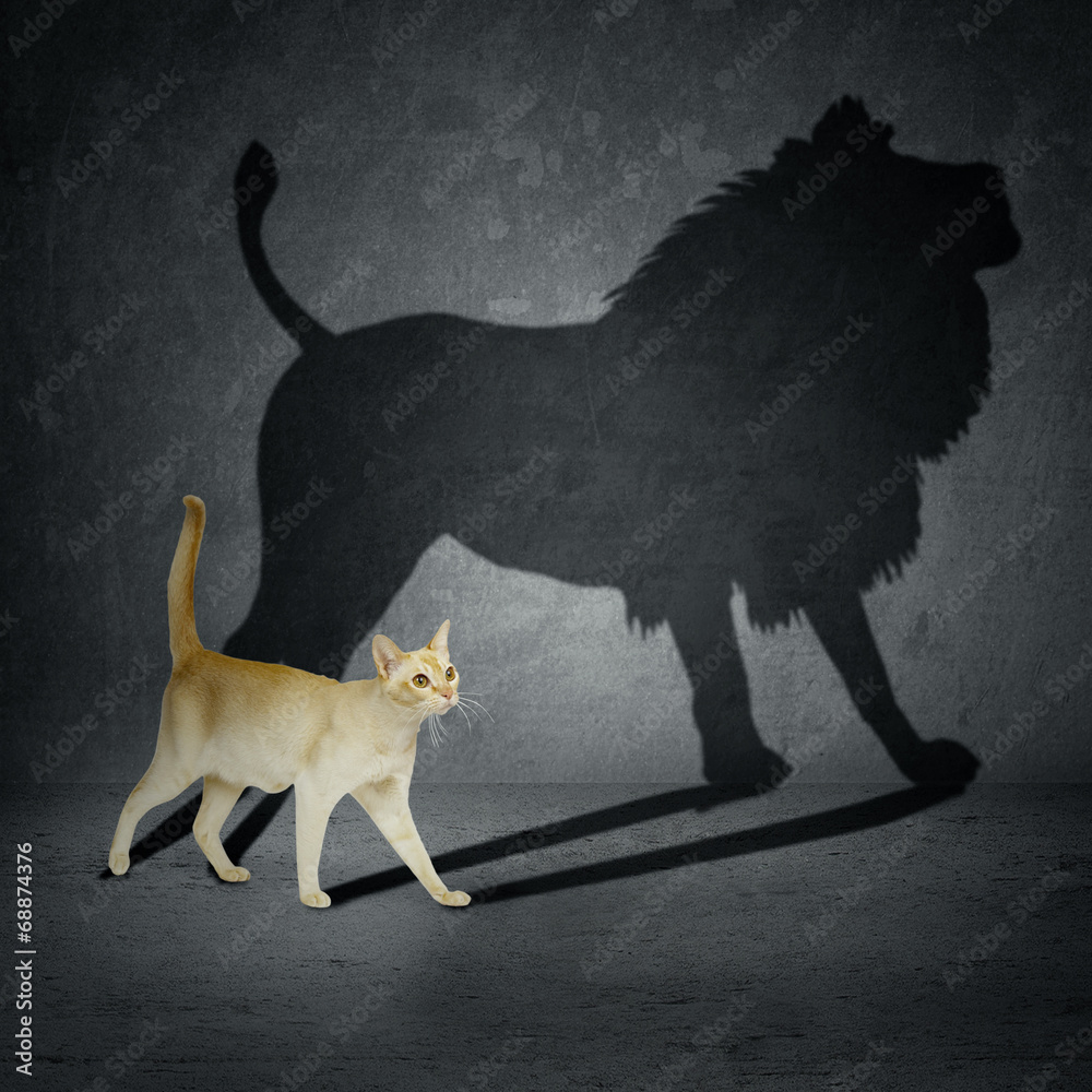 Fototapeta Cat with lion shadow
