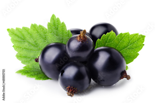 Fotografia  Black currant