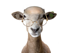 Ram Wearing Spectacles.