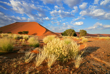 Desert Landscape With Red Sand...