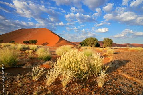 Fotografie, Obraz  Desert landscape with red sand dunes, Sossusvlei