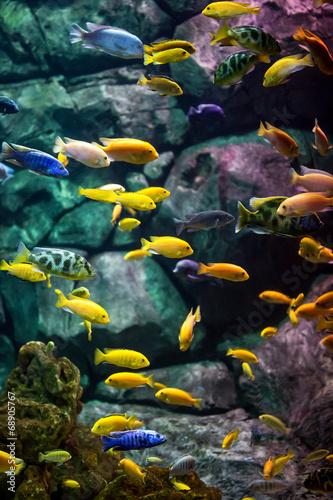Valokuva  fishes.