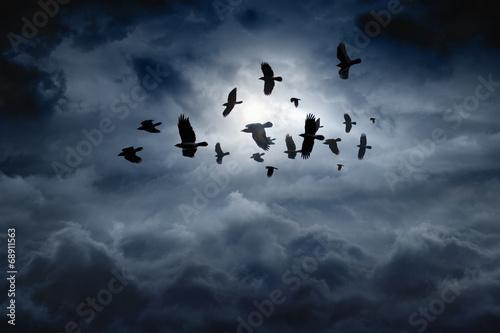 Fototapeta Latające kruki na nocnym niebie XL