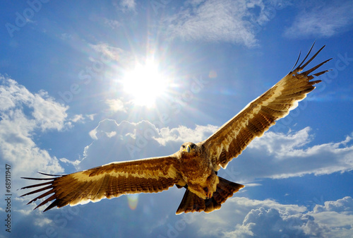 Photo  Steppe Eagle