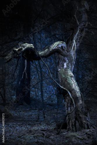 upiorne-stare-drzewo