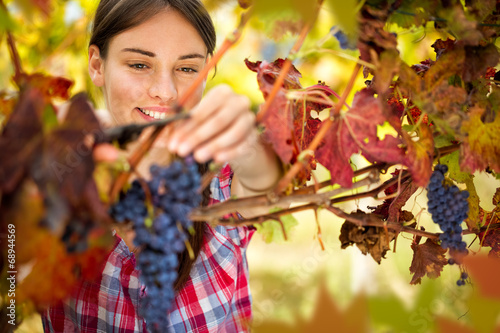 Fotografía  Smiling woman harvesting grapes