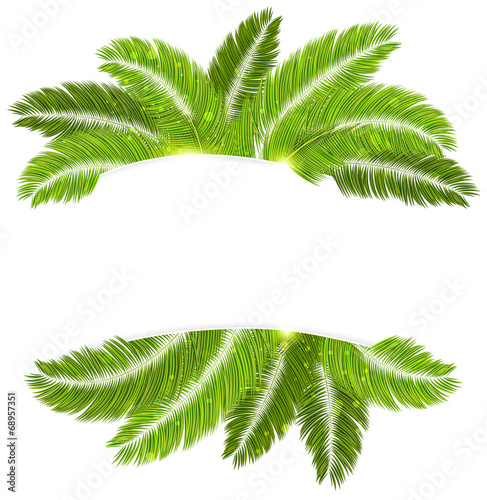Palm branches Wall mural