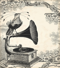 The Bird Music