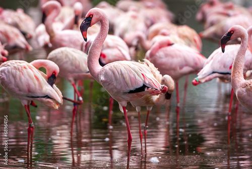Foto op Aluminium Flamingo A flock of pink flamingos and reflection in the water.