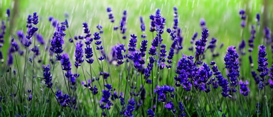 Panel Szklany Lavendelfeld