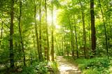 Głęboki las w promieniach słońca