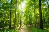 Las w promieniach wiosennego słońca