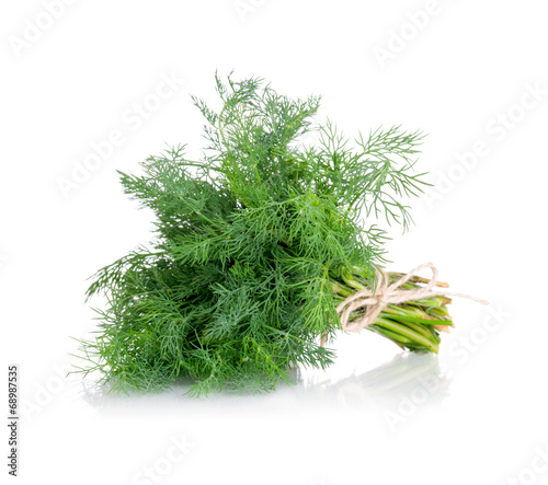 Garden Poster Plant Bunch of fresh dill. Isolated on white background