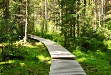 Panel Szklany Podświetlaneforest path